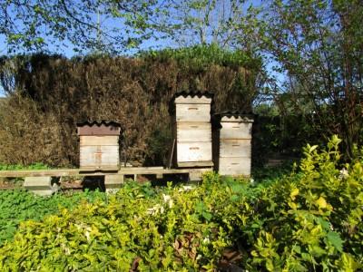 Bijenkasten