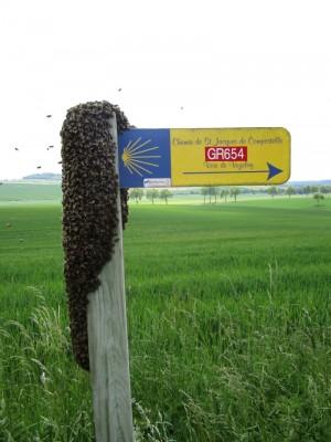 Klont bijen