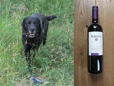 Hondje-Wijntje
