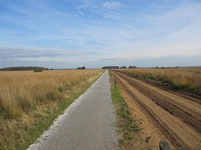 Dwingeloosche Heide