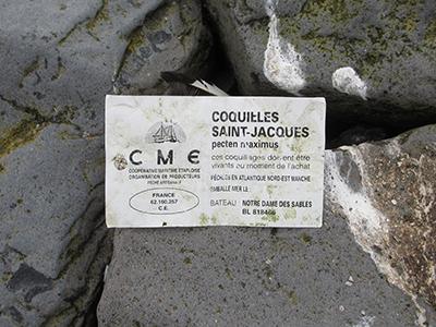 Coquilles Saint-Jacques - Sint Jakobsschelp